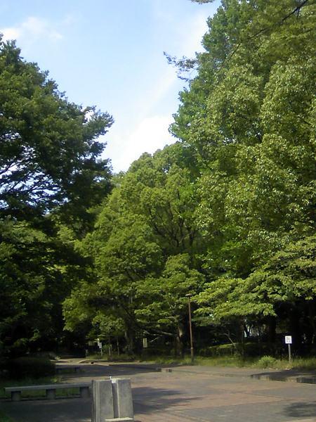 20110706-6.JPG